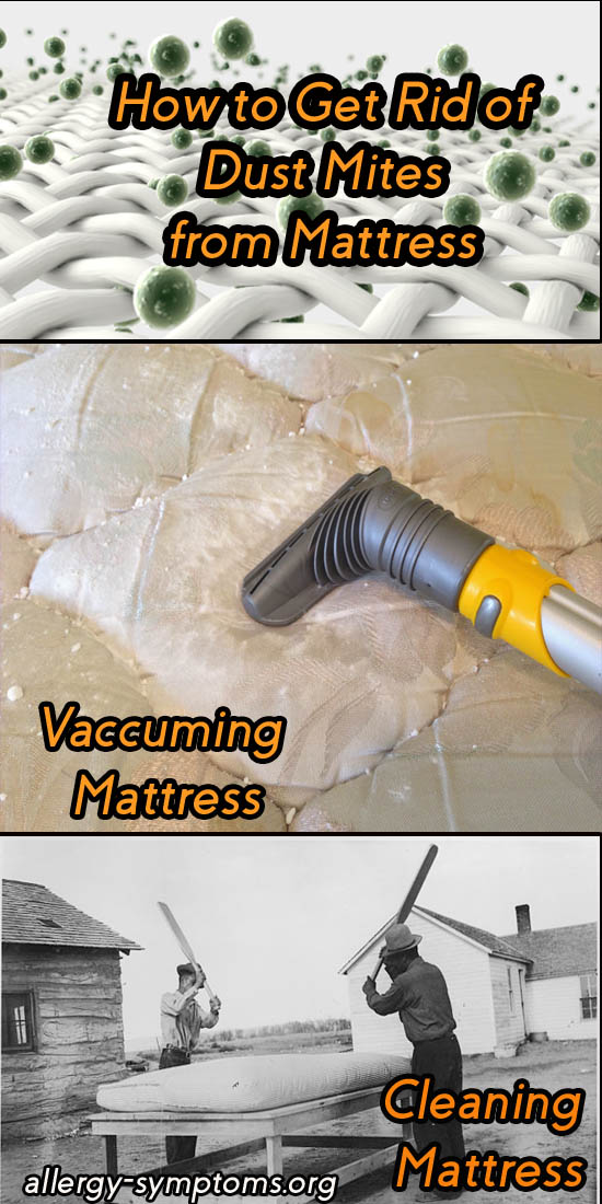 How To Get Rid Of Dust Mites From Mattress Allergy