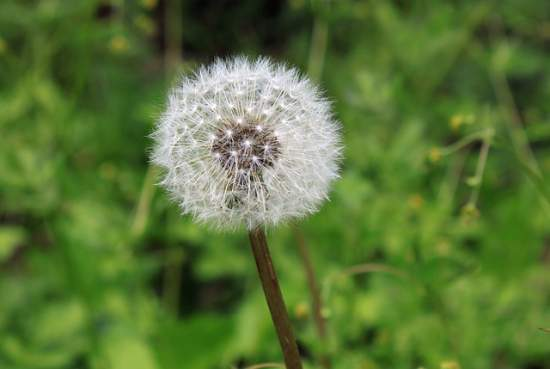 Can Pollen Allergies Cause Body Aches Allergy Symptoms Org